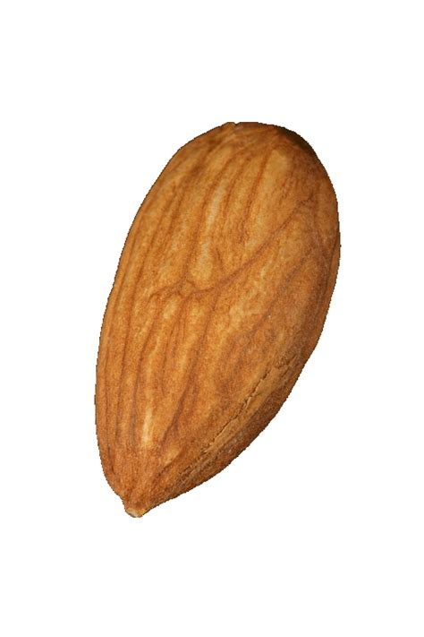 Almond Almond Types Of Nuts