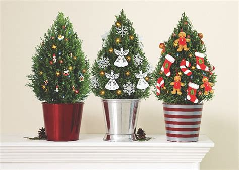 european cypress christmas tree miniature european cypress trees with lights gingerbread