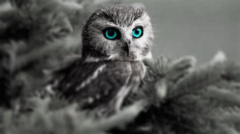 Piyama Owl Blue Piyama Owl blue owl