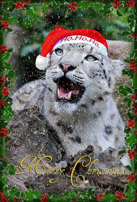 snow leopard said merry christmas a photo on flickriver