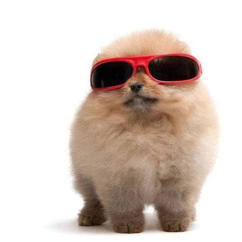 names for pomeranians to be the o jays and puppys on