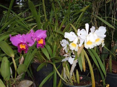 garten pflanzen reihenfolge teneriffa botanischer garten in de la