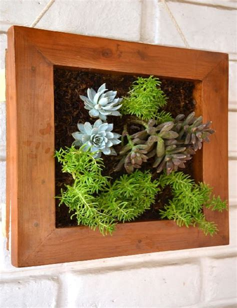 Succulent Frame My Farmscape - green frame succulent canvas only for bangalore