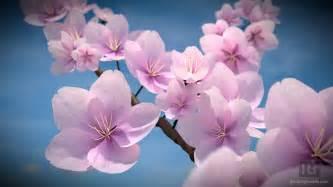 flowers blooming blooming flowers blendergoodies