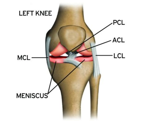 knee ligaments sports knee therapy