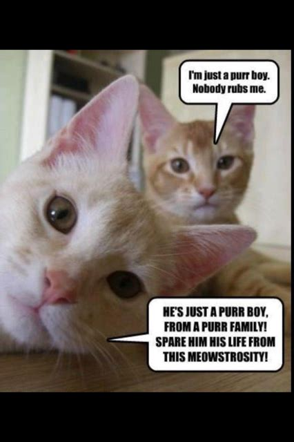 Lol Cat Meme - lolcats purrform bohemian rhapsody meme guy