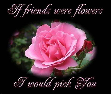 holiday wallpapers friendship day flower wallpapers