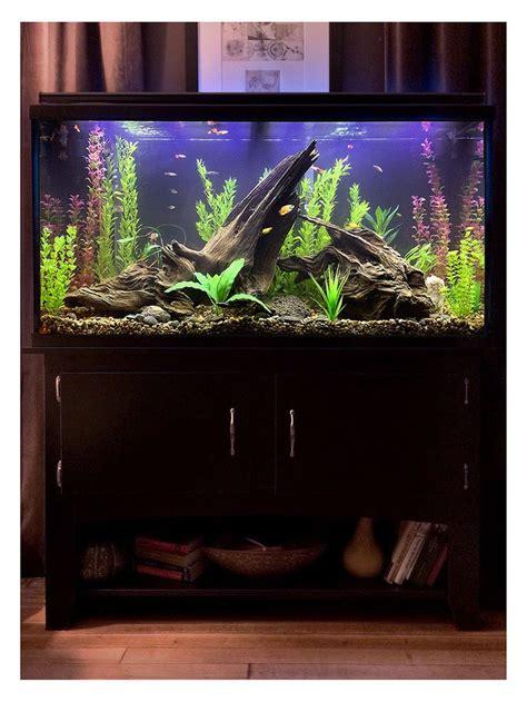 Design Quallen Aquarium   die besten 25 aquarium bett ideen auf pinterest fisch
