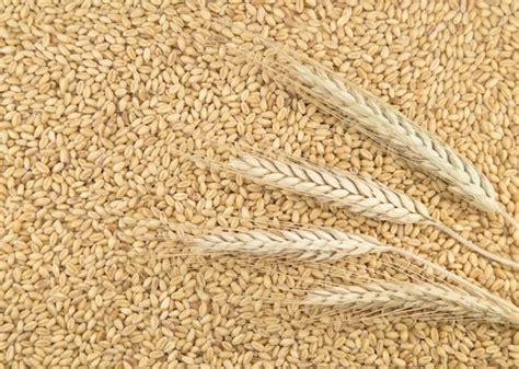 di commercio di treviso prezzi cereali sequestrate 37 tonnellate di cereali destinati alla semina