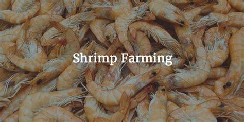 shrimp farm financial model template efinancialmodels