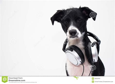 djs dogs dj royalty free stock photography image 38320487