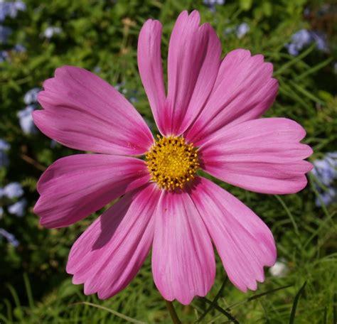 imagenes de uñas flores una flor por a b r nomadasfsg