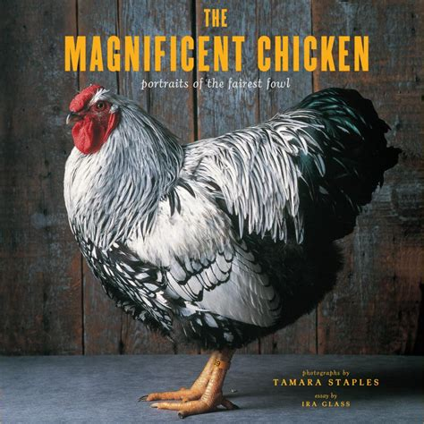 the magnificent book of animals books chicken fancy hgtv