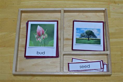 montessori 3 part cards template johnny appleseed apple mini theme unit