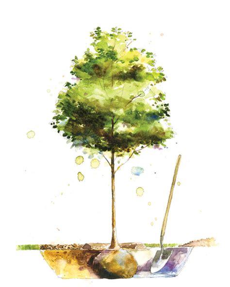 martha stewart tree instructions plant a tree martha stewart