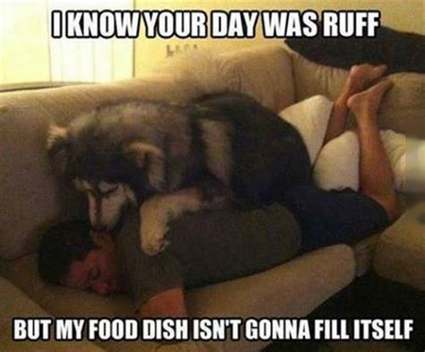 Dog Food Meme - ruff day dog