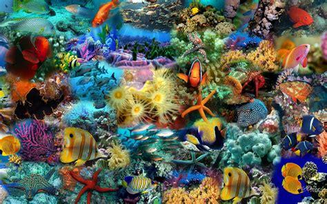 sfondilandia fiori sfondilandia immagini e wallpaper natura paesaggi e animali