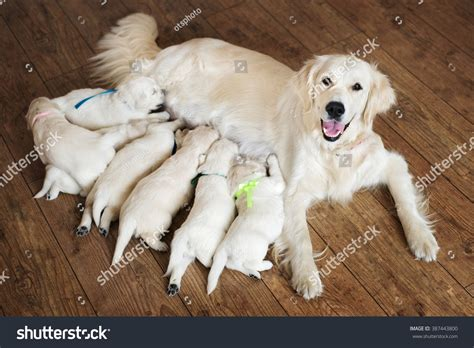 feeding puppies happy feeding puppies stock photo 387443800