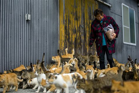 cat island in japan a visit to aoshima a japanese cat island the atlantic