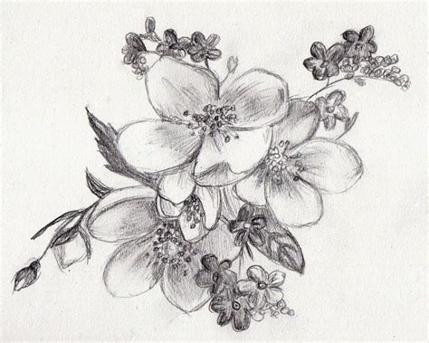 Drawings Tumblr Flowers Tumblr Drawing Drawings Inspiration Images For Drawing