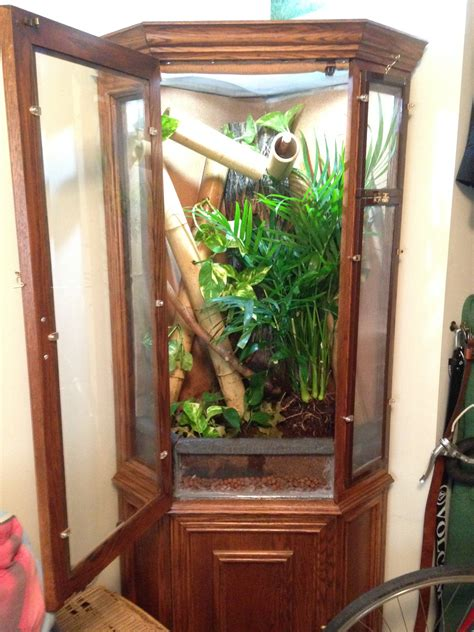 diy chameleon cage convert china cabinet  arboreal