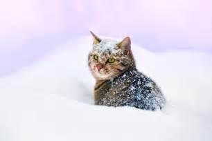 Sofa For Cats So Kommt Ihre Katze Gut Durch Den Winter