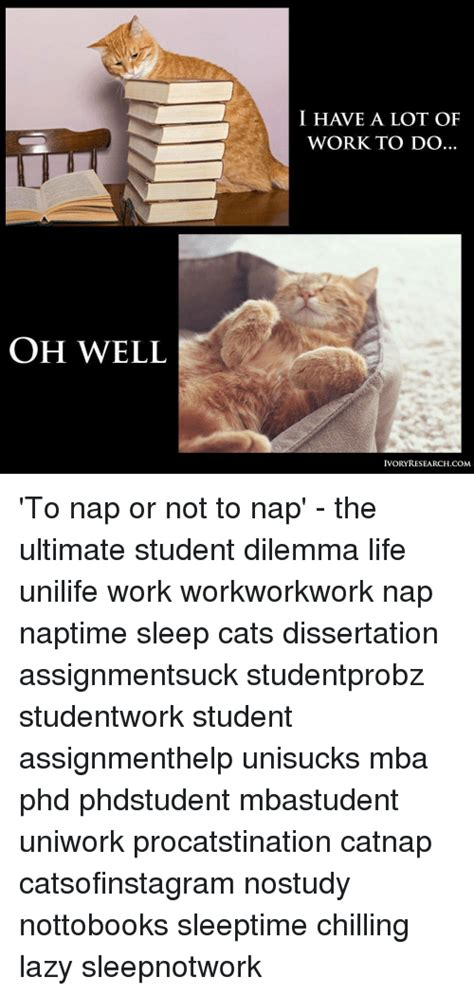 Mba For Student With Not Alot Of Experience by 25 Best Memes About Sleeping Cats Sleeping Cats Memes
