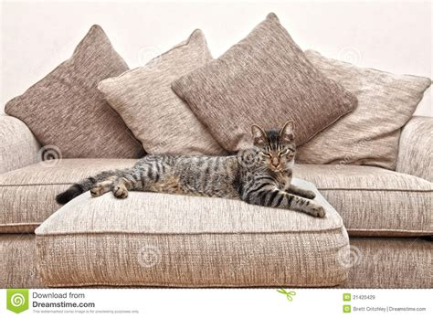 cat on sofa cat on sofa royalty free stock images image 21420429