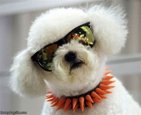 cool puppy i am the cool funnydogsite