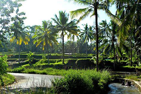 Detox Bali Ubud by Ubud Photo Gallery Free Ubud Photos