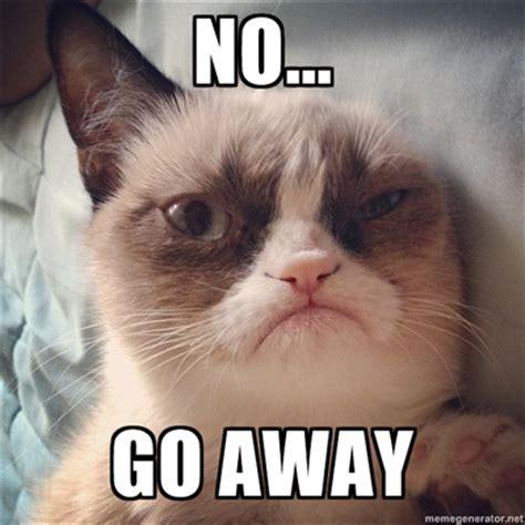 tard the grumpy cat no no grumpy cat funny cat