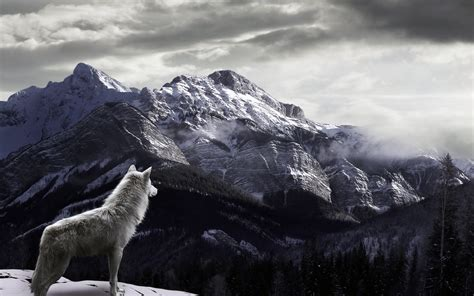 wolf backgrounds wolf wallpaper for iphone 72 images
