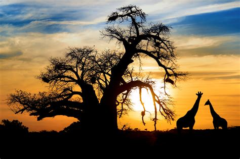 in africa adventures in the big country books du lịch nam phi du lich nam phi