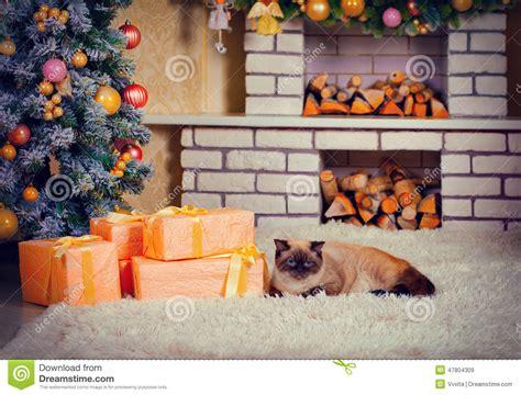 nagellack auf dem teppich katze die auf dem teppich am vorabend des weihnachten