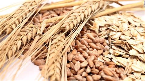 whole grains with protein do you need to eat more protein cnn