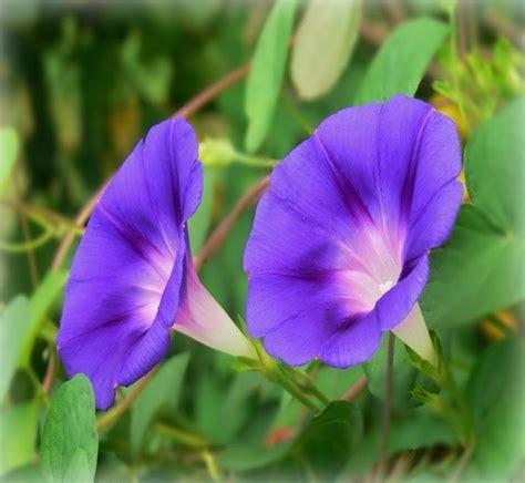 imagenes de flores y sus nombres nombres cientificos de plantas related keywords