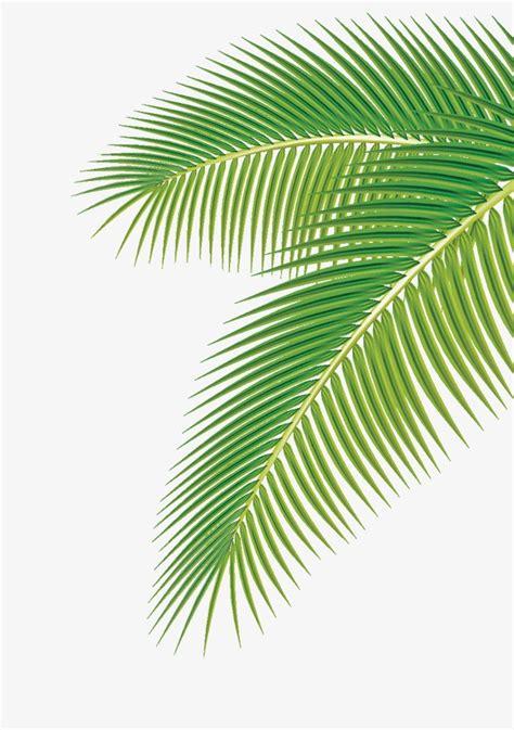 wallpaper daun palma folhas de palmeiras as folhas as 225 rvores verde png