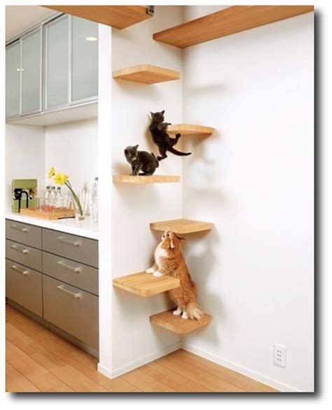 1000 Images About Animal Ideas On Cat Shelves