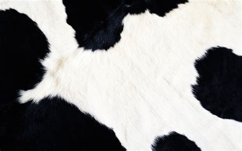 cow fur texture kostenloses foto hintergrund kuh tier pelz