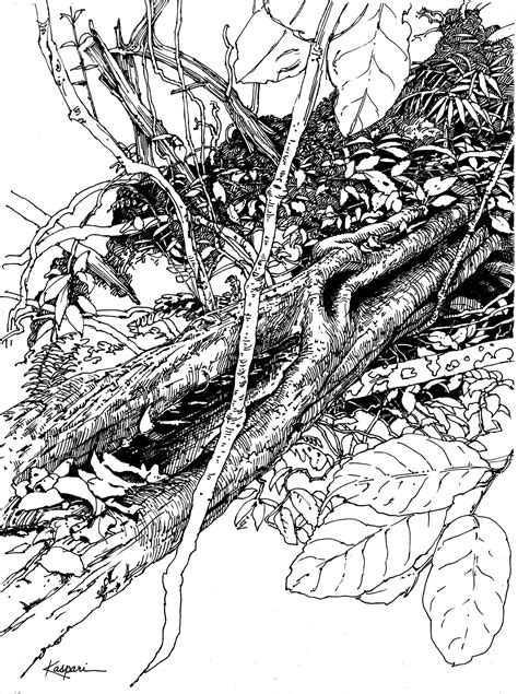 plein air   ink drawings drawing  motmot