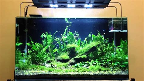 3ft planted tank with maxspect razor led 8000k youtube