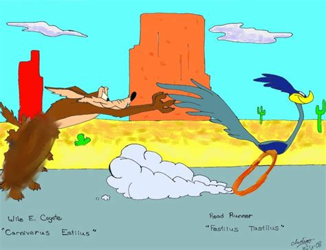 funny coyote road runner wile e coyote and the road runner cartoons i love