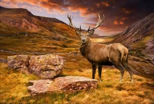 deer landscapes deer stag in moody dramatic mountain sunset landscape