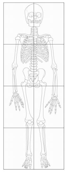 printable toddler size skeleton anatomy art projects