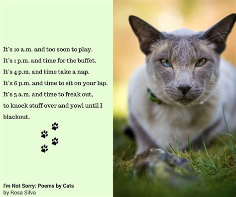 We Are The Cat Excerpt by I M Not Sorry Poems By Cats Is A Great New Book For Cat