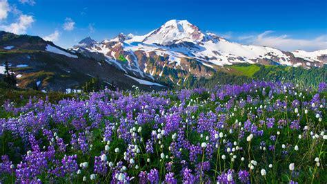 Flower Mountain mountain flowers snow landscape wallpapers hd desktop