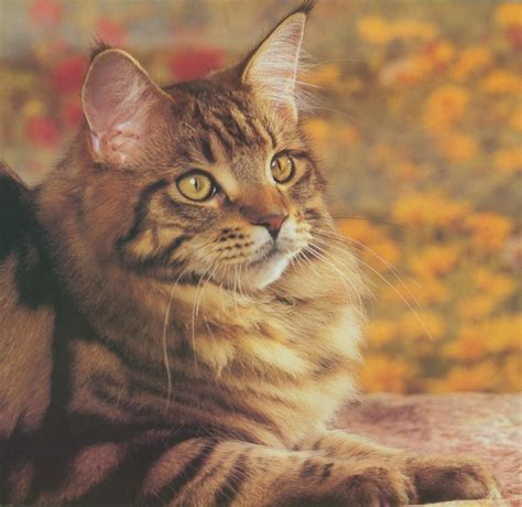 Japanese Modern House tiger house cat