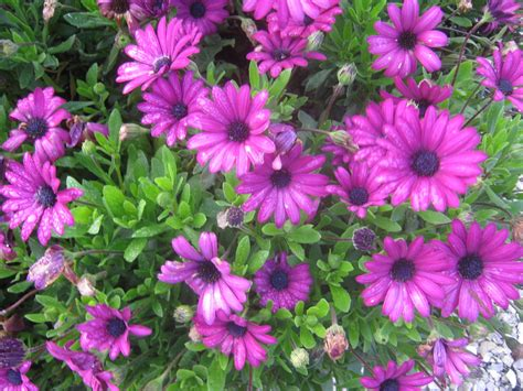 ornamental plants ornamental plants with names www pixshark com images