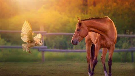 wallpaper horse free download horse hd wallpapers free download