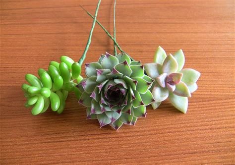 diy succulents succulent wedding bouquets centerpieces more